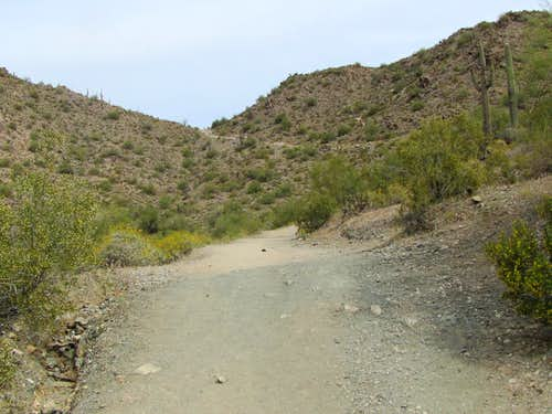 Trail high point on Goldmine Mountain