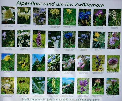 Zwoelferhorn Flora