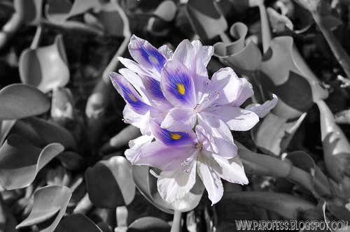 Water flower in cut out