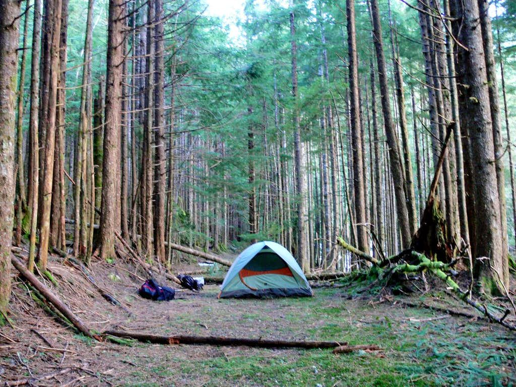 camping in the woods. Perfect The Camping In The Woods In The