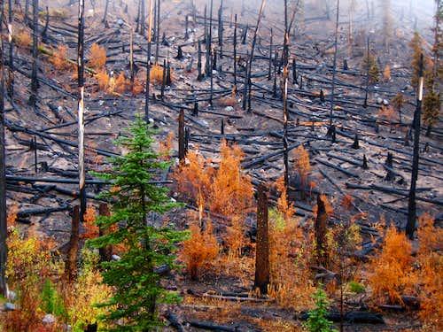 Eightmile Creek burn