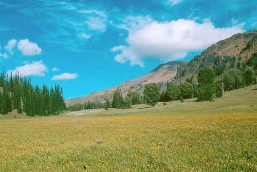 This meadow is immediately...