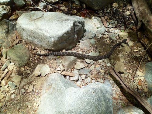 Rattlesnake in Icehouse Canyon