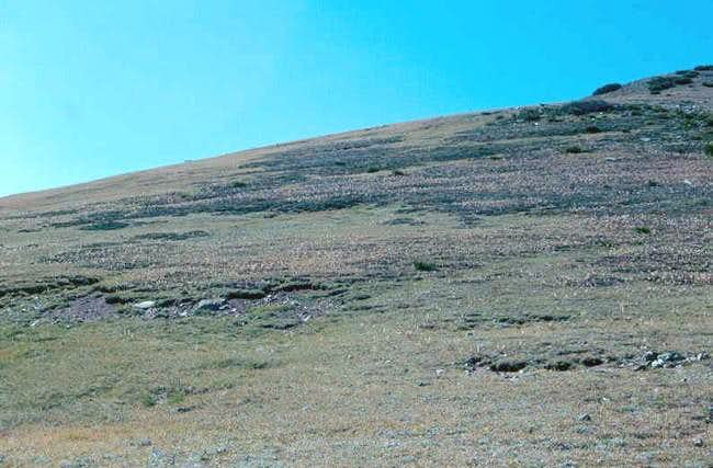 Alpine vegetation on the...