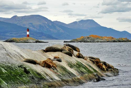 Clichet photo of sea lions and end of the world lighthouse