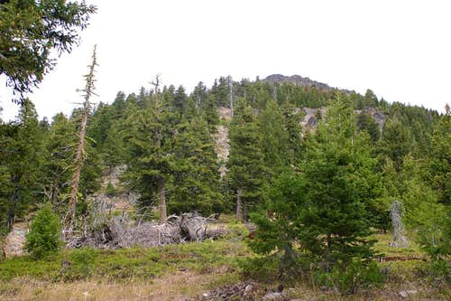 Leaving the Joaquin Miller Trail for Berry-Norton