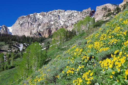 Deseret Peak - Early Summer