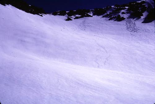 Curl Col and My Tracks