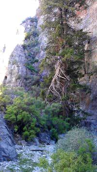 Sawtooth Canyon