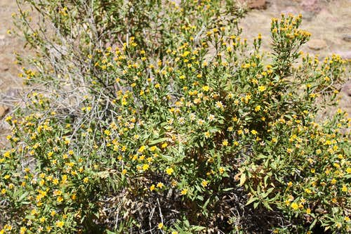 North Kaibab Trail Flowers in Bloom