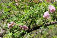 Close up of Flowering Tree with Butterfly on North Kaibab Trail