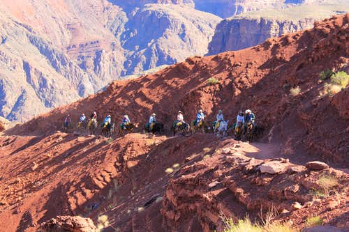 Mule Train on South Kaibab Trail