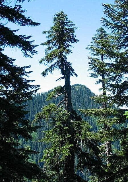 Buck Peak as seen from the...