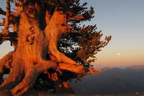Wally Tree and Supermoon