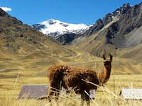 Vilcanota, Peru July 2012