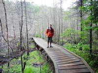 Raised Walkway Through Dead Tree Area
