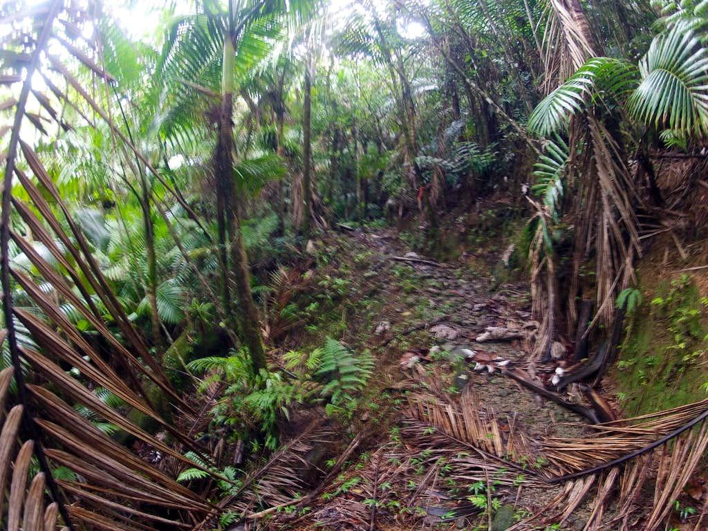 las picachos trail