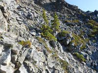 Mountain Hemlocks