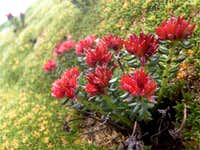 Red flowers in the moss