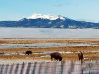 Buffalo grazing in front of...