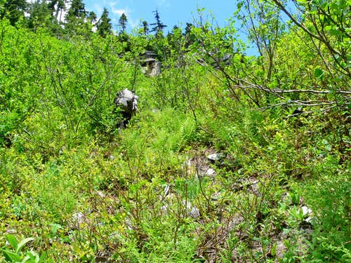 Veggie Belaying Down