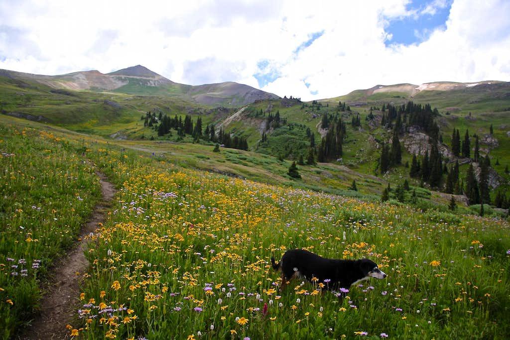 Upper Bear Creek trail