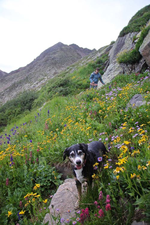 and more wildflowers