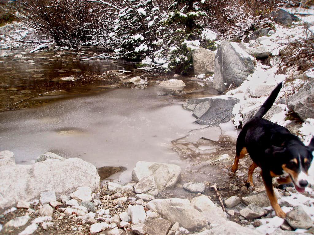 Fun wading through ice