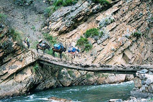 Our pack mules crossing a log...