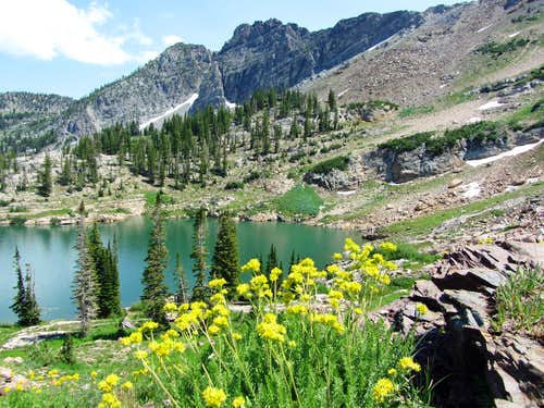 Cecret Lake wildflowers