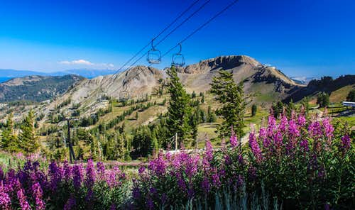 Fireweed and Squaw Peak