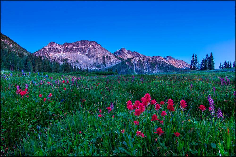 Twilight meadows
