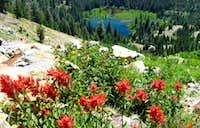 Thompson Peak Trail wildflowers