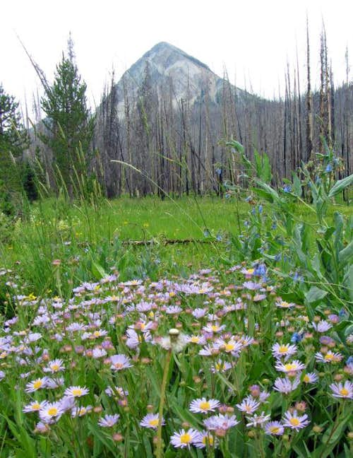 Un-named peak & wildflowers