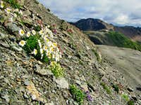Punta Rossa/Rotlspitze with flowers