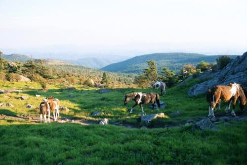 Ponies at Rhododendron Gap