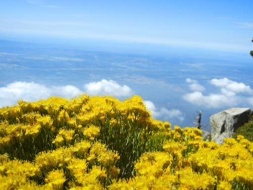 View from summit of Cucamonga Peak
