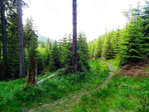 Trail to Snieżnik hut