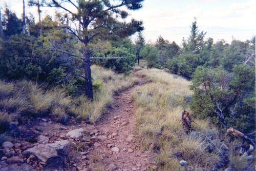 A view of the trail near the...