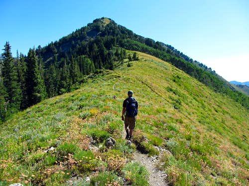 Gobblers Knob trail