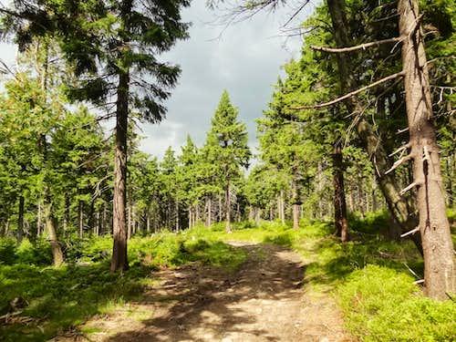 Path to the top of Wielka Sowa