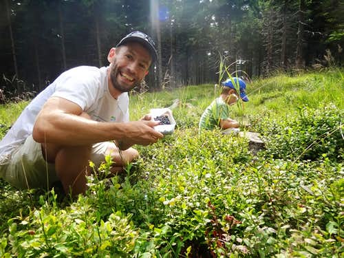 A summer hike on Wielka Sowa, or blueberries picking