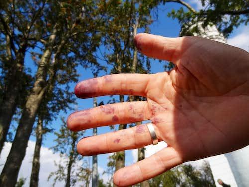 Blueberries picking !