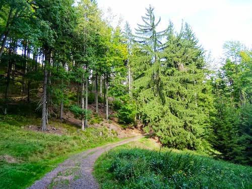 Trail east from Waligóra
