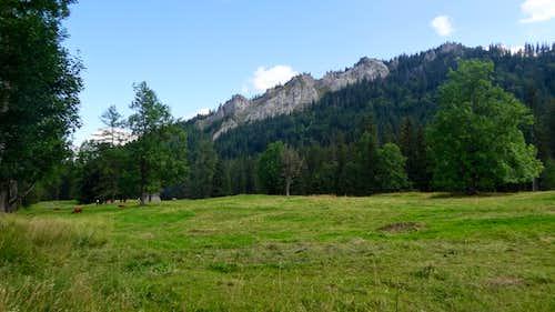 Dolina Bystrej (near Kużnice )