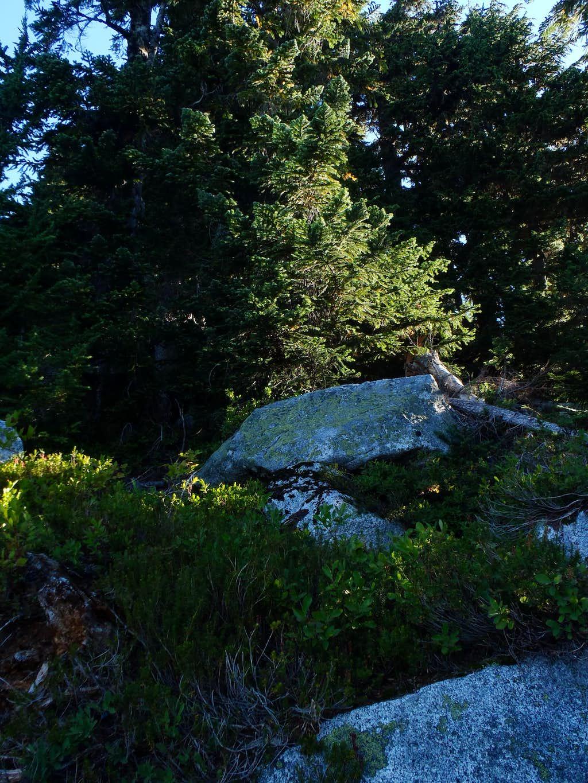 K9 - Thick Ridge Growth