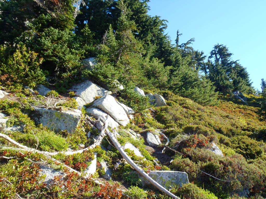 K9 - Steep Meadow Sidehilling