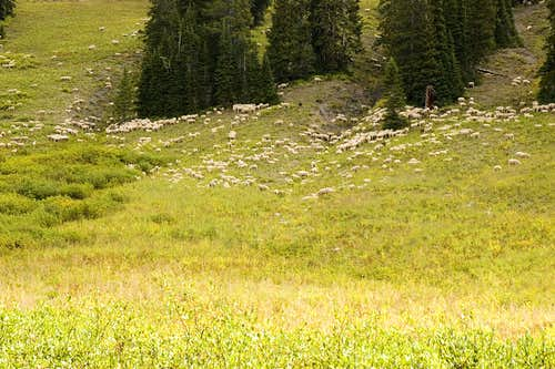 Sheep Near Silver Creek