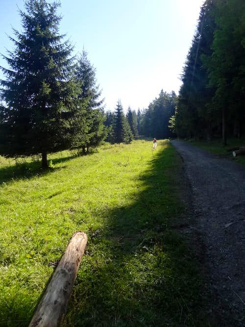 Droga pod Reglami near Dolina Kościeliska