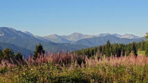 Fireweed on Gubałówka hill, looking to the Western Slovak Tatras